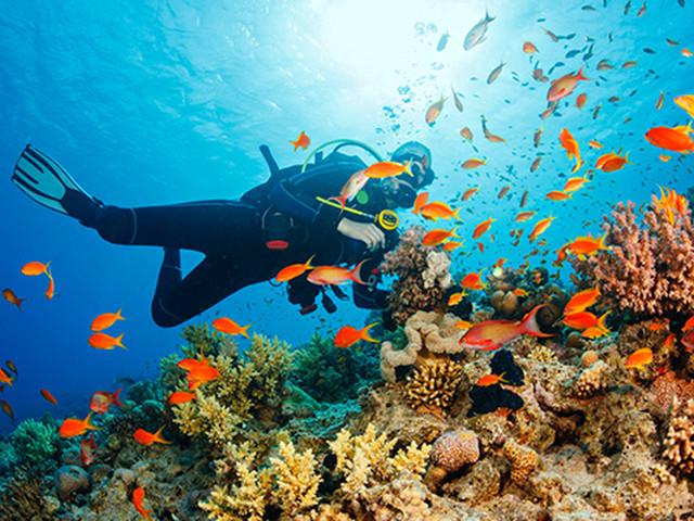 <泰国旅游芭提雅出海潜水考证OW/AOW深潜格兰岛酒店接送>