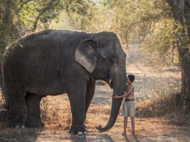 <清迈 美旺大象营 骑大象+喂养大象+大象洗澡半日体验 >(ATV越野车 / 竹筏漂流/黑森林餐厅)