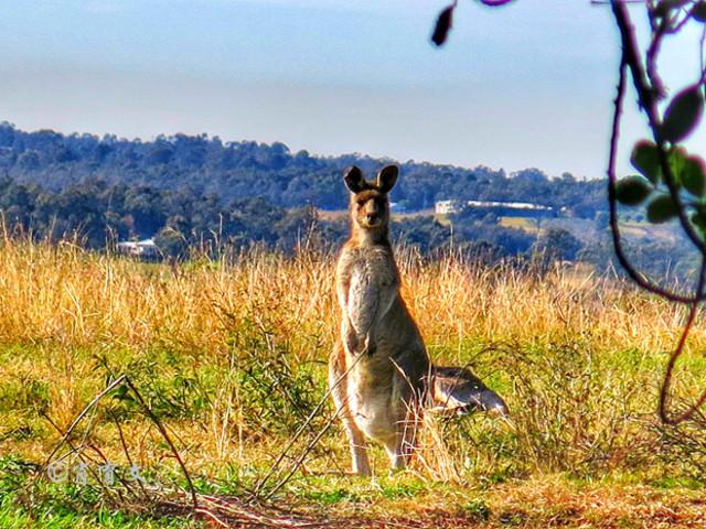 <澳大利亚 猎人谷文艺佳酿美食·休闲品酒 一日游>纯玩无购物 不一样的悉尼美景,登高远望,看尽澳洲繁华