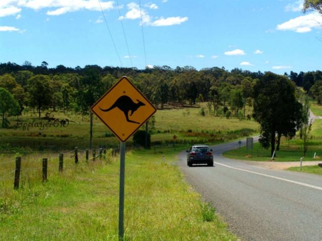<澳大利亚 新猎人谷+中央海岸 一日游>纯玩无购物 不一样的悉尼美景,登高远望,看尽澳洲繁华