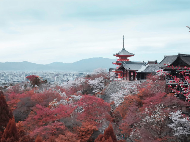 <日本旅行达人 为你设计专属旅行路线(电子指南书+全程代预订服务)>独家体验 当地人玩法 特色美食