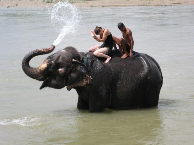 <中餐�d拍�z地象▲�u�T大象一小�r(海�)>�T大象 大象表演 海�№大象共浴