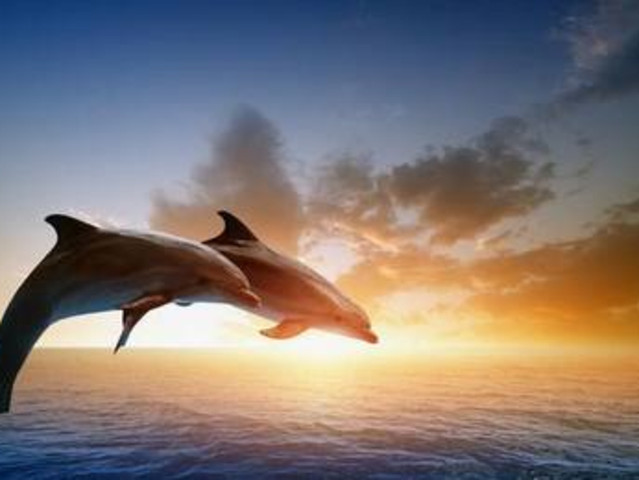 <弗里曼特尔  考夫斯港海豚海洋魔术公园>一分钟闪电出票 即买即用(可当日订票)