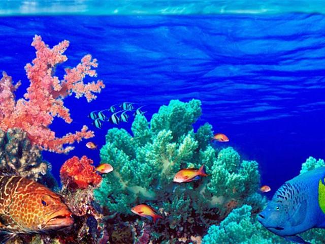 <大小皮皮岛 鸡蛋岛 玛雅湾Sea Star快艇一日游>浮潜用具 蛙镜 呼吸管 救生衣(当地参团)