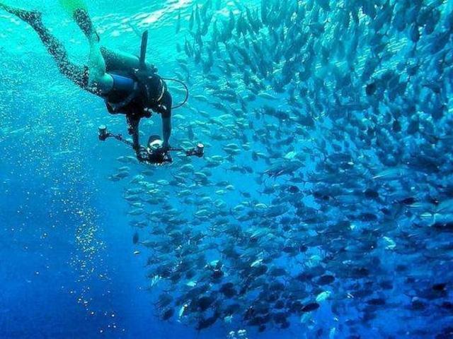 <仙本那 詩巴丹潛水一日游>Sipadan限量名額 深潛浮潛雙選 專業潛導