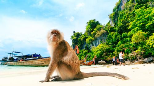 泰国-普吉岛6或7游