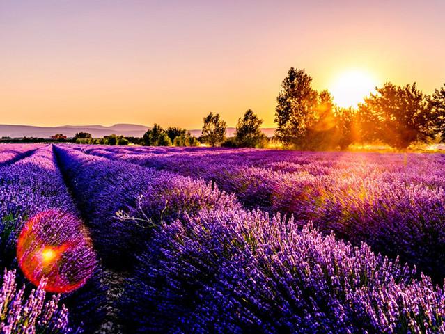 <浪漫南法 法国13日自驾游>阿维尼翁古城+拜访《山居岁月》+普罗旺斯薰衣草