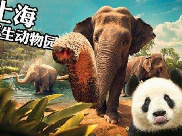 <上海野生动物园+俄罗斯国际大马戏一日游>近距离看动物 亲子玩乐 看俄罗斯国际大马戏