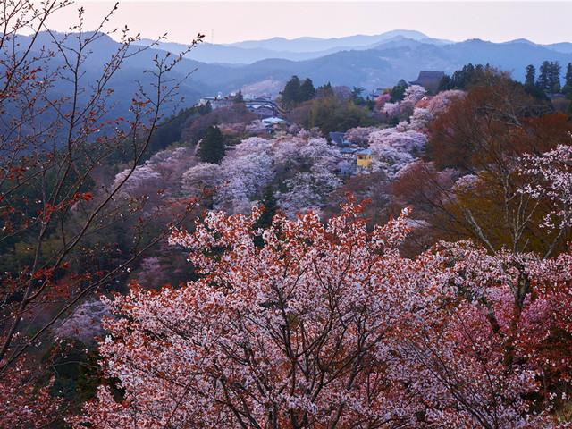 奈良|吉野山