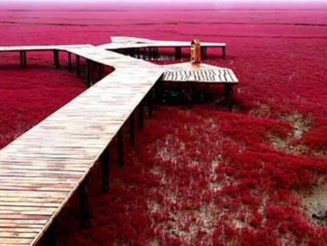 <盘锦红海滩风景区(廊道)红色海岸线纯生态一日游>纯玩无购物