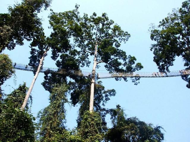<西雙版納-望天樹熱帶雨林+空中走廊+游船深度純玩一日游> · 含套票 · 游覽時間≥3小時 · 贈水