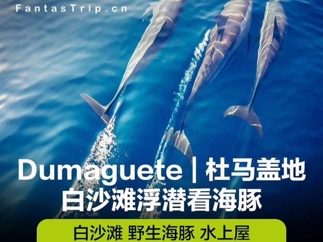 <消暑力荐 杜马盖地拜斯白沙滩海豚湾一日游>(专业潜水导游+豪华BBQ+水上屋+追逐海豚)