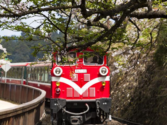 阿里山櫻花小火車