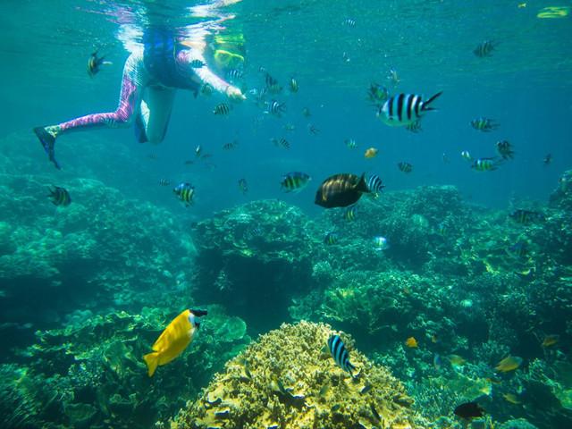 <垦丁后壁湖 浮潜体验>天天可定 夏日戏水 观赏珊瑚 热带鱼 不限游玩时间