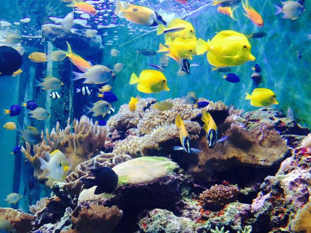 <菲律宾长滩岛一日游水下观光:海底漫步>中文导游 海底世界