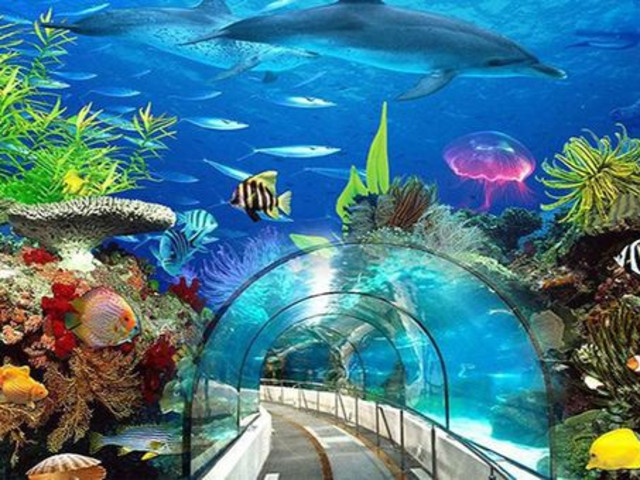 <太平洋水族馆-赏鲸-爱荷华号战舰一日游>全美第四的太平洋水族馆佔地面积约为20,000平方米,馆内展示超过12000海洋生物