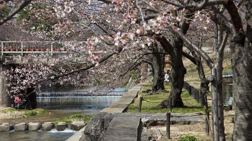 日本本州7日游
