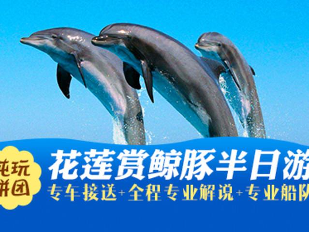 <【中国国旅】市区接送 台湾花莲拼车赏鲸半日游 >出海赏鲸豚  近距离感受海豚在海上激情跳跃  纯玩0购+热力推荐当地参团