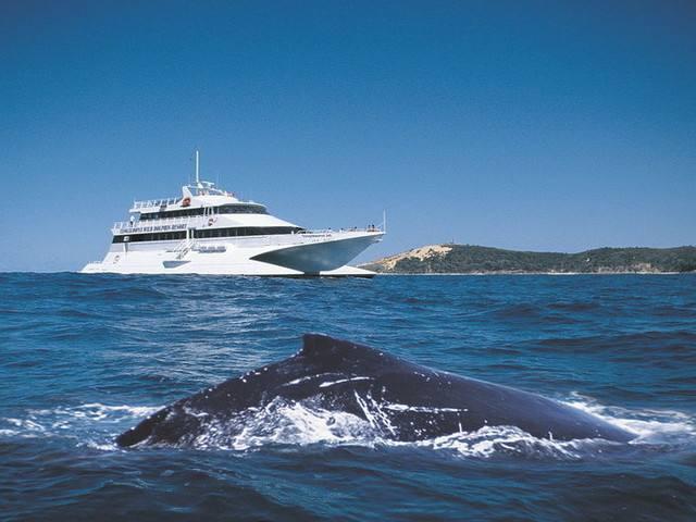 <美国波士顿观鲸船电子票>