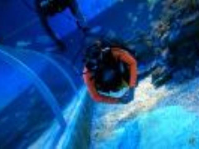 <重庆巴南汉海海洋公园深潜体验>【零基础可体验 带你进入蓝色海洋世界】