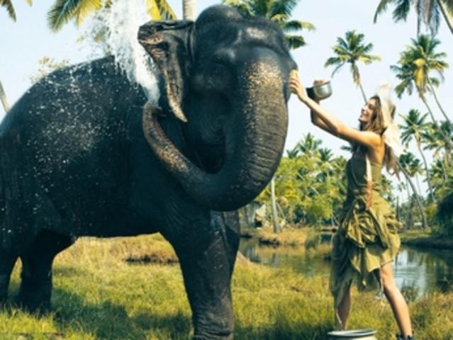 <美康大象保育中心大象泥浆浴半日or一日游(爱护环境 ?;ご笙螅?亲密接触大象、看大象撒欢卖萌、?;ど?、学习大象的语言
