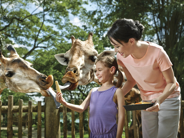 <新加坡日间野生动物园门票>含游园小火车  可订今日