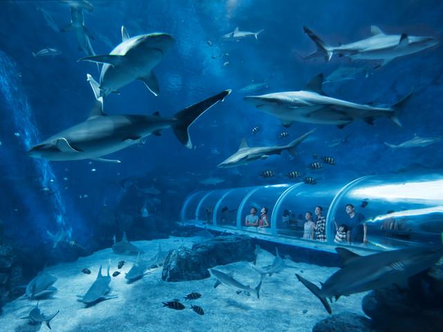 <新加坡SEA海洋馆门票圣淘沙水族馆景点门票>当天可订