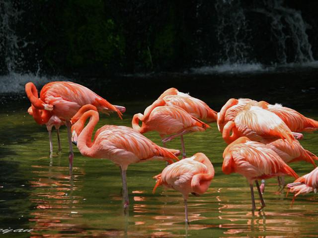 <新加坡裕廊飞禽公园 Jurong Bird Park门票>今日可订+含园区小火车(可选与鹦鹉共进午餐)