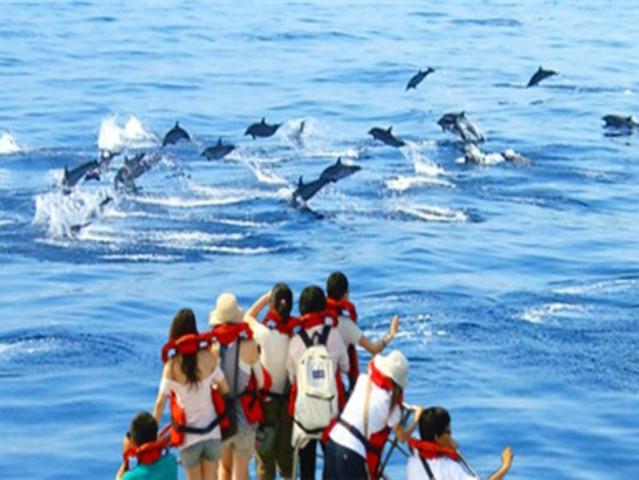 <宜兰龟山岛一日游>观海豚或泡温泉二选一  阿宗芋冰城 4人成行 天天发团