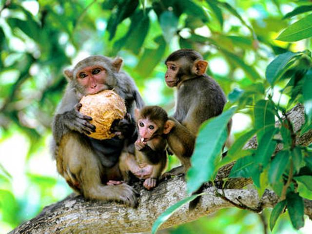 <南灣猴島+椰田古寨一日游>親子專線、含景區門票 跨海索道 探尋童趣時光