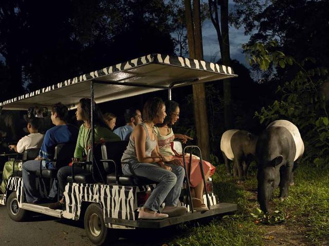 <新加坡夜間動物園中文小火車>