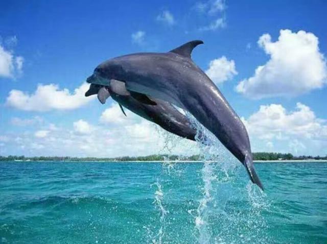 <毛里求斯 惬意旅行社 海上卡丁船快艇追海豚一日游>(与海豚共游 自驾卡丁船出海 在印度洋享受当船长的惬意)