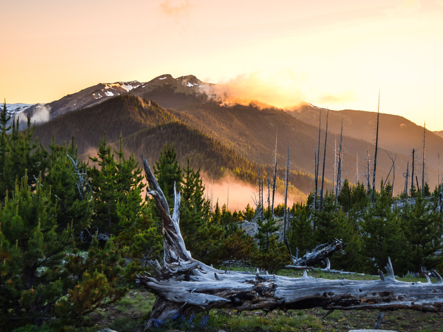 <美国-西雅图-奥林匹克国家公园 1日游>【西雅图出发+碧蓝新月湖奥+林匹克飓风崖+中英文双语导游+渡轮返回西雅图】