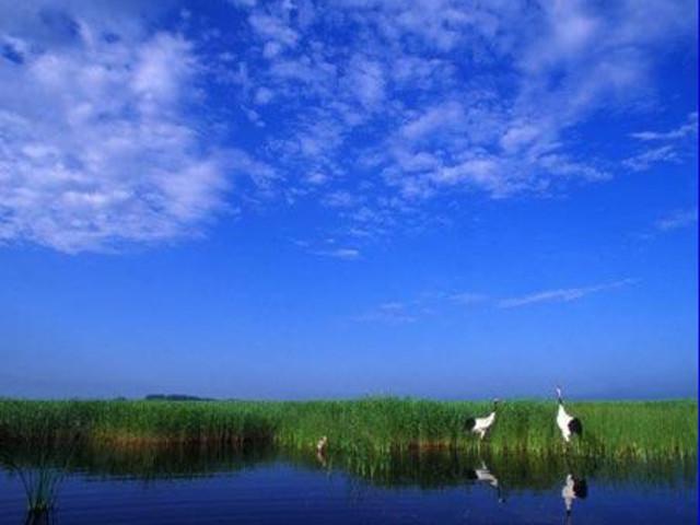 <齐齐哈尔、扎龙自然保护区1日游>2人成团观看丹顶鹤放飞表演 含扎龙电瓶车