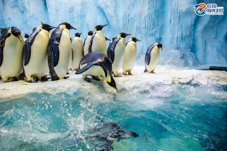 <珠海长隆海洋王国1日游>深圳出发,观震撼烟花汇演、与海豚亲密接触、玩冰川过山车、全程0购物