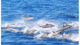 台湾花莲赏鲸一日游